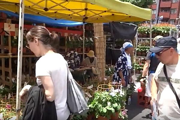 入谷朝顔まつり(入谷朝顔市)